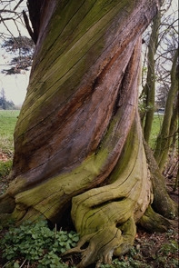 Защита древесины.