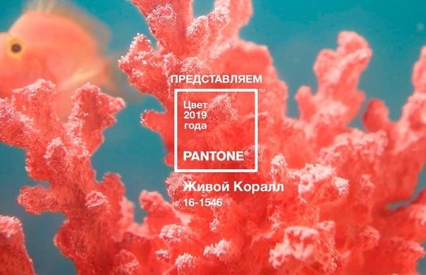 Living Coral - цвет 2019 года